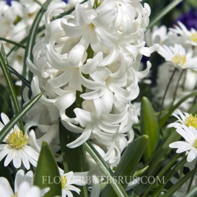 Lasagne planting 2013 - series white
