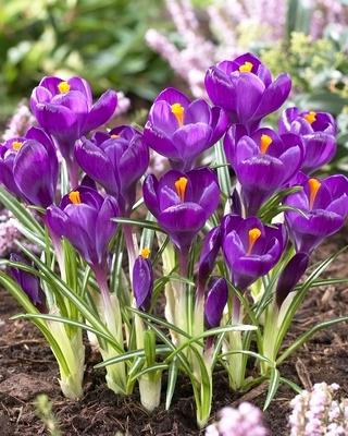 FlowerRecord1338978375