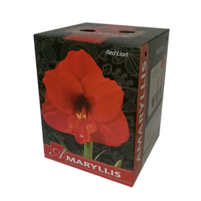 redlion_amaryllis_giftbox
