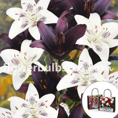 Perfect Partners Gift Bag Lilium, lilies, gift, flower, flower bulb