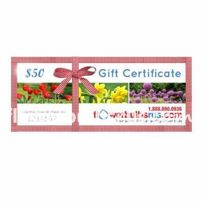 gift certificate, gift