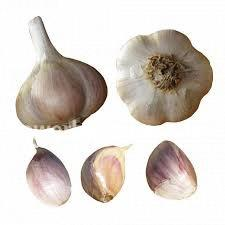 Garlic - Music, garlic, bulbs, plants, herbs